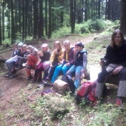 Světlušky v lese